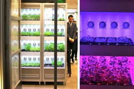 Evogro makes indoor plant growing systems for chefs