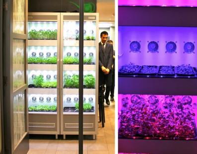 إخترع Evogoro نظام داخلي لزراعة النباتات من أجل الطهاة